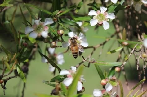 2017-02-21 bee